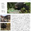 「森の王者 ツキノワグマ〜母と子の知られざる物語〜」再放送‥