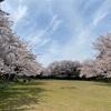 ふらっと桜を見に行ったら、嬉しいシンクロがありました♪