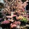 ≪本店1階≫ 今年もスタート!! ❀❀ 桜、はじまりました ❀❀
