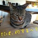 noa's blog