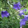 今日の庭 (花と野菜)
