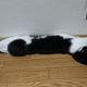 今日の黒猫モモとハチワレ猫ナナ久しぶりニャン♪