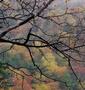 秋雨の奥日光①湯ノ湖~湯滝