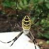 クモの糸、クモの巣(網)