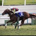 condom_horse