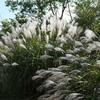 初秋の神戸森林植物園。ムギマキ or キビタキ。ヤマガラ、コゲラ、モズ。