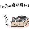 猫あるある~アマゾンの箱が落ちてる~