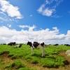 牛のげっぷ由来のメタンガス発生を減少させる飼料用添加剤(DSM)