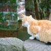 猫ログ別冊:京都のネコはん