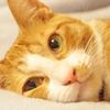 【克服】猫アレルギーは治るの?症状を治す方法や軽減させる方法とは