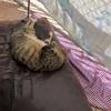 猫ホイホイ作っちゃった