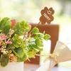 初心者さんにも育てられる!?鉢植えの花、室内できれいに育てよう!