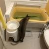 母の訪問入浴で菖蒲湯をしてもらったのでうちのお風呂にも入れてみた