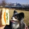 休日のランチは近所の公園で自家製サンドイッチ
