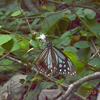 蝶を愛し、蝶に愛され🎵