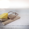 新しいチーズを探せ!変化の激しい環境を生き抜くために
