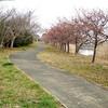 宮島池公園散策&河津桜