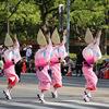 神戸まつり 阿波踊り