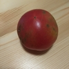 トマトの実験 7〜8日目