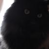 猫ログ:今日の王子 5