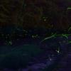 岐阜県美濃加茂市のホタルはどこで見れる?時期は?時間帯は?蛍の数え方は?持ち物は?美濃加茂市立三和小学校と川浦川に行けば見れますよ!