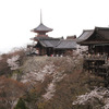 京都桜 京のお花見コース(清水寺)