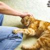 猫と共に暮らす猫アレルギー