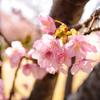 追記しました:春の気配を感じます ~防災の話とピンクの処方~
