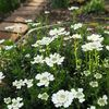 白い花と白いバラ