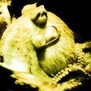 Super Octopus