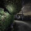 夜の8時に夜散歩🐕匂ってくるのはキンモクセイの香りではなく○○⁉️