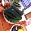 7/30 Jivamukti Yoga&amp&#59;amp&#59&#59;Raw food WS!