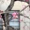 SSK (SunnySide of Kyoto)(+699/1064)
