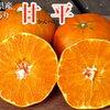「甘平」は愛媛生まれの新しいみかん!たっぷりの甘さとシャキシャキ食感の果肉が美味しい!!