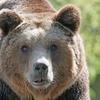 北海道旅行時の野生動物との交通事故!!ドライバーから見た動物の危険