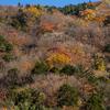 奈良県の紅葉スポット、秘境みたらい渓谷へ。紅葉のみたらい渓谷って写真愛好家の評価が高く有名になったんだって。