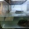 水中フィルター改造。&ベランダのカメ水槽に落ち葉投入。