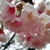 【春が…きた😄🌸】