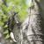 日本で最も小さいキツツキ、コゲラ。