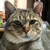 不覚にも世界猫の日を忘れそうになる(ΦωΦ)
