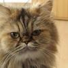 猫が好きな人たちが選定した'最も育てたかった猫'TOP 5