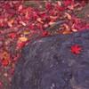 紅葉 Leica M3 Velvia50