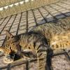 8月後半の #ねこ #cat #猫 その4