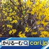 Uber Eats(ウーバーイーツ)って? cari.jp