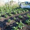 第二農園のレイアウトと現状について