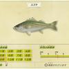 【あつ森】「スズキ(魚)」の出現時期・場所・時間帯情報まとめ【あつまれどうぶつの森】
