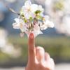 桜で成長を感じる