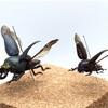 【浪漫飛行】パプキン夫婦のロマンス標本製作について【展翅標本】