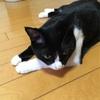 猫タワー倒れる!