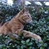 2月後半の #ねこ #cat #猫 その1